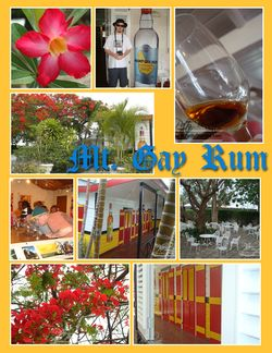 Mt gay rum collage-002