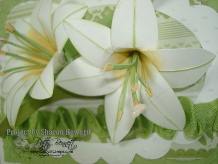 Sharon easter lily closeup